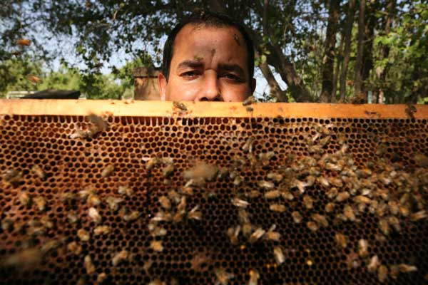 Video: Arabian beekeeping